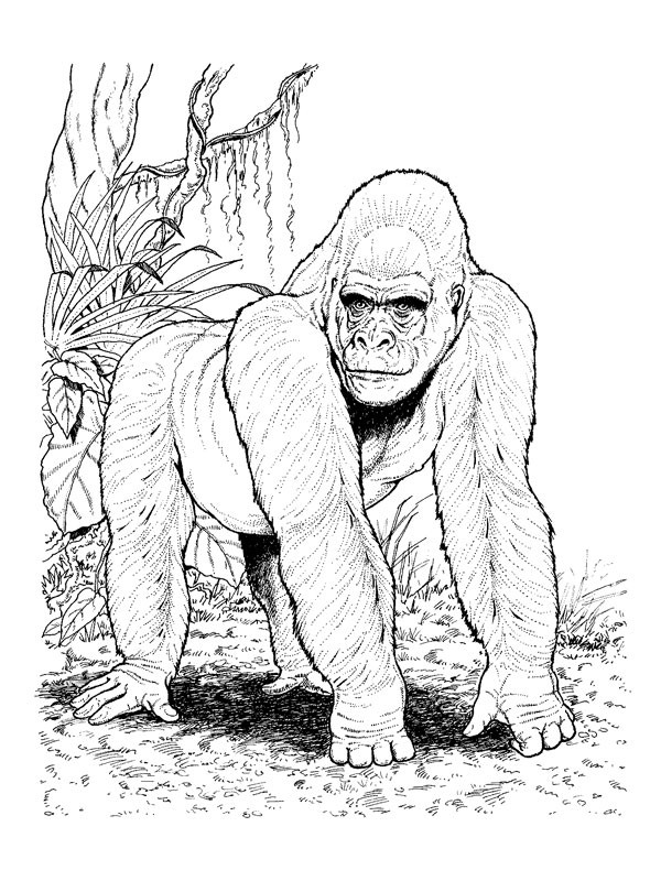 Coloriage gorille r aliste dessin gratuit imprimer - Gorille coloriage ...