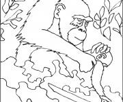 Coloriage Gorille soigne son petit