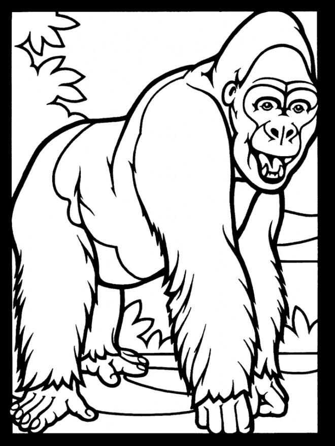 Coloriage et dessins gratuits Gorille vecteur à imprimer