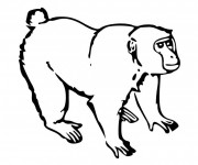 Coloriage Petit Gorille
