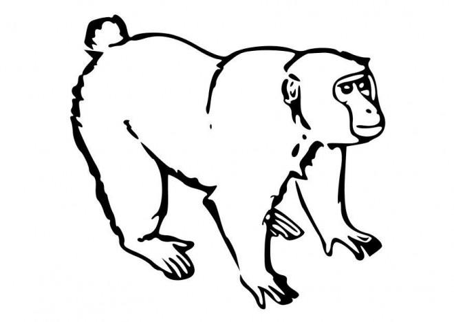 Coloriage et dessins gratuits Petit Gorille à imprimer