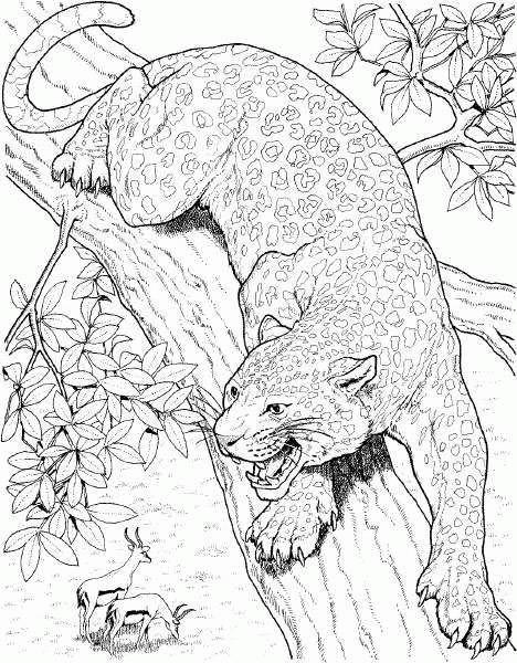 Coloriage et dessins gratuits Guépard au crayon à imprimer