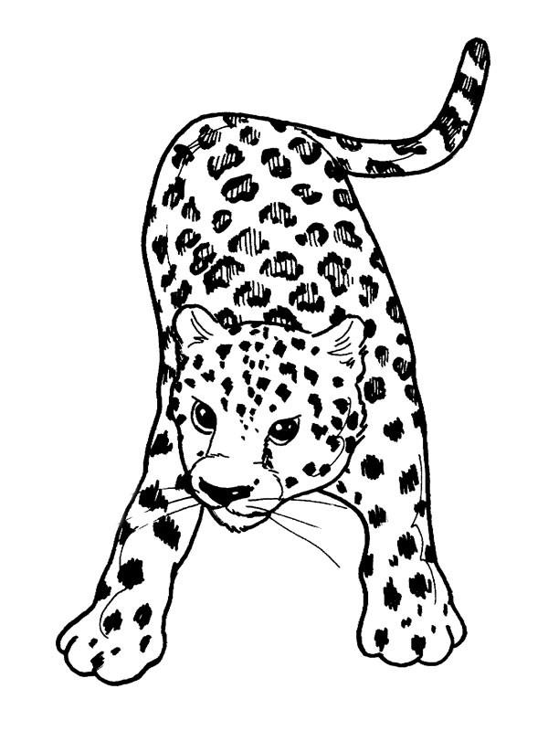 Coloriage et dessins gratuits Guépard avec le regard attentif à imprimer