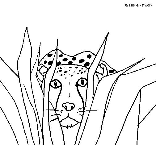 Coloriage et dessins gratuits Guépard caché à imprimer