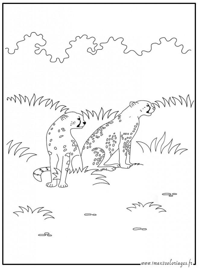 Coloriage et dessins gratuits Guépard dans la forêt à imprimer