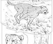 Coloriage et dessins gratuit Guépard dans la Savane à imprimer