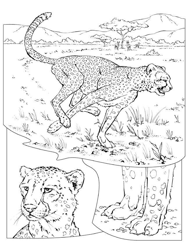 Coloriage et dessins gratuits Guépard dans la Savane à imprimer