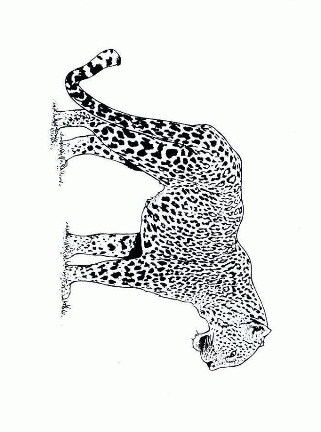 Coloriage et dessins gratuits Guépard en plein air à imprimer