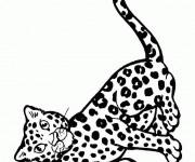 Coloriage et dessins gratuit Guépard en s'amusant à imprimer