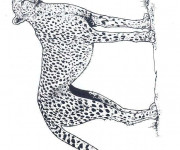 Coloriage et dessins gratuit Guépard en train de surveiller à imprimer