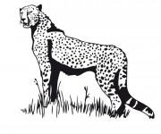 Coloriage Guepard