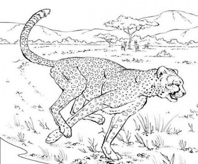Coloriage et dessins gratuits Guépard qui court à imprimer