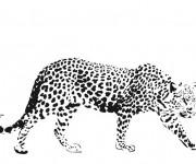 Coloriage et dessins gratuit Guépard réaliste à imprimer