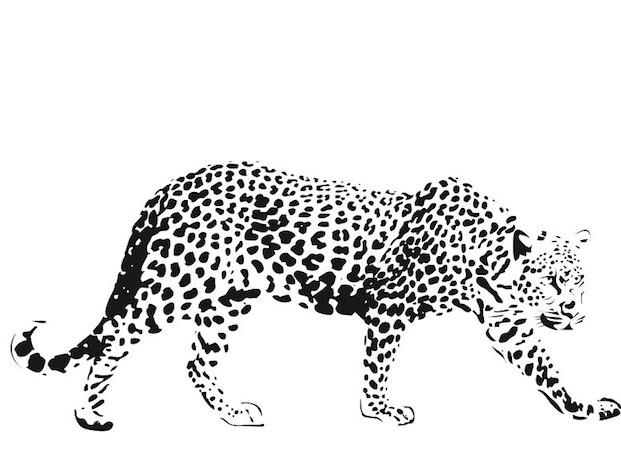 Coloriage et dessins gratuits Guépard réaliste à imprimer