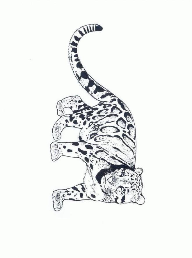 Coloriage Guépard royal dessin gratuit à imprimer