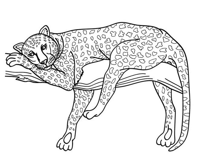 Coloriage et dessins gratuits Guépard se repose à imprimer