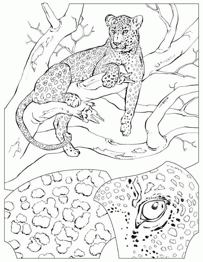 Coloriage et dessins gratuits Guépard sur l'arbre à imprimer