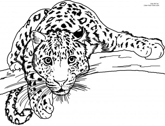 Coloriage et dessins gratuits Guépard te regarde à imprimer