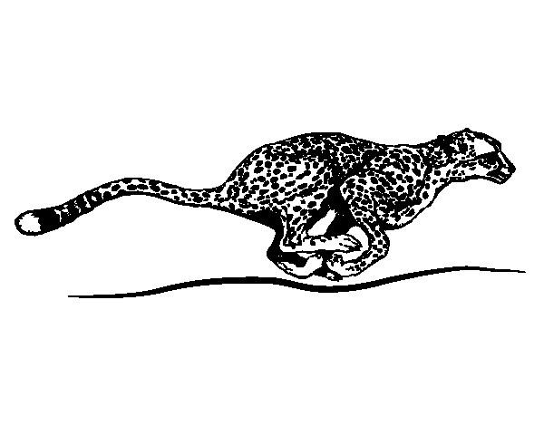 Coloriage et dessins gratuits Guépard très rapide à imprimer