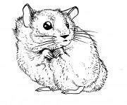 Coloriage Hamster au crayon