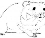 Coloriage et dessins gratuit Hamster en noir et blanc à imprimer