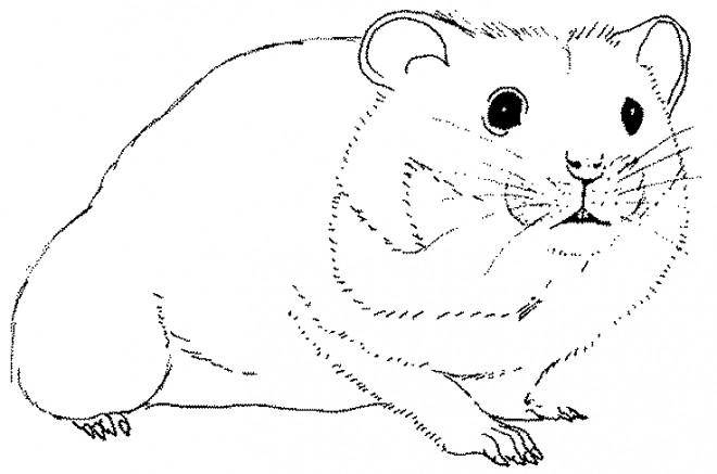 Coloriage et dessins gratuits Hamster en noir et blanc à imprimer