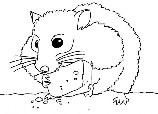 Coloriage hamster mange de fromage dessin gratuit imprimer - Hamster gratuit ...