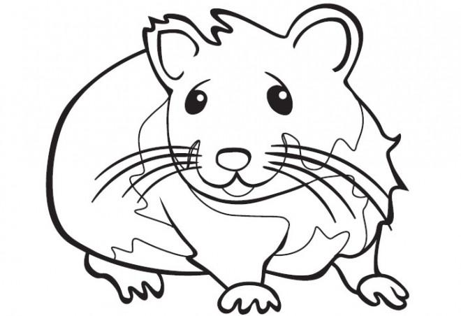 Coloriage et dessins gratuits Hamster pour enfant à imprimer