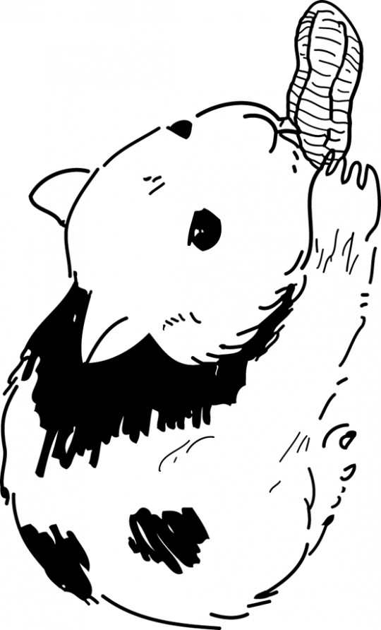 Coloriage Hamster qui mange dessin gratuit à imprimer