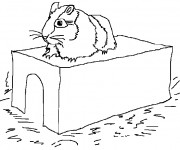 Coloriage Hamster russe