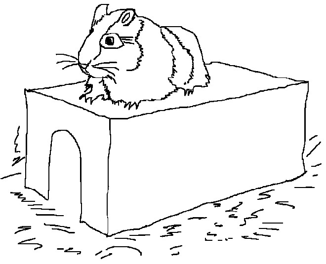 Coloriage et dessins gratuits Hamster russe à imprimer