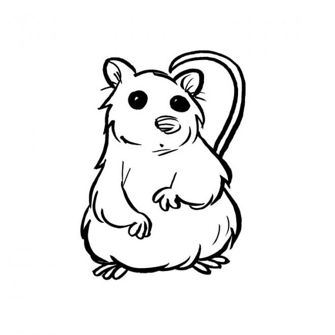 Coloriage hamster simple dessin gratuit imprimer - Hamster gratuit ...