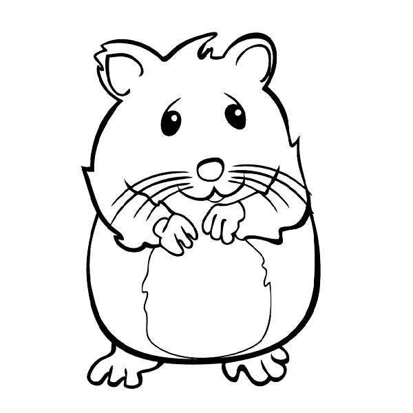 Coloriage Hamster timide dessin