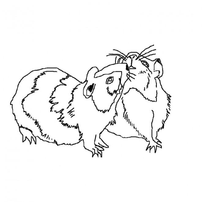 Coloriage et dessins gratuits Hamsters à télécharger à imprimer