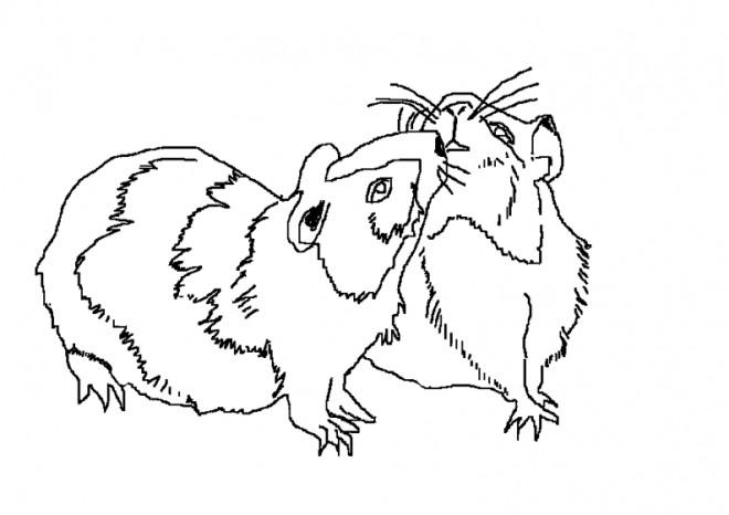Coloriage et dessins gratuits Hamsters russe en ligne à imprimer