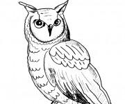 Coloriage et dessins gratuit Hibou au crayon à imprimer