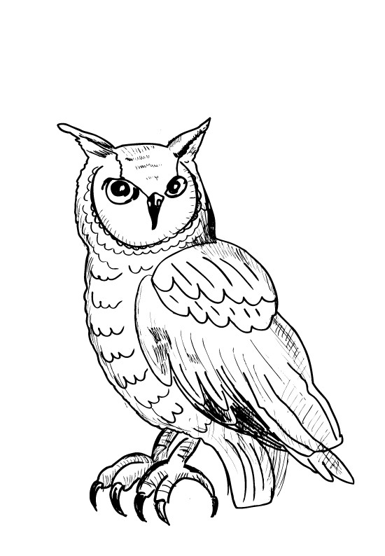 Coloriage hibou au crayon dessin gratuit imprimer - Hibou a colorier ...