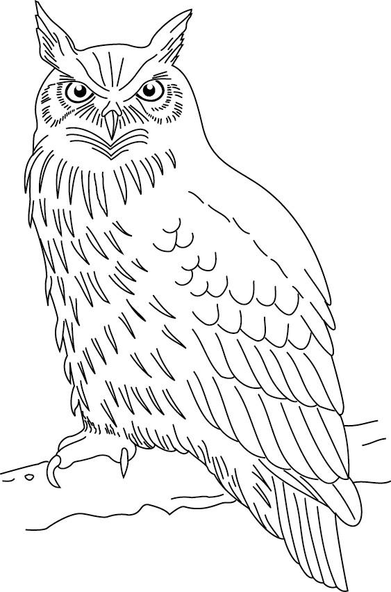 Coloriage et dessins gratuits Hibou avec le regard attentif à imprimer