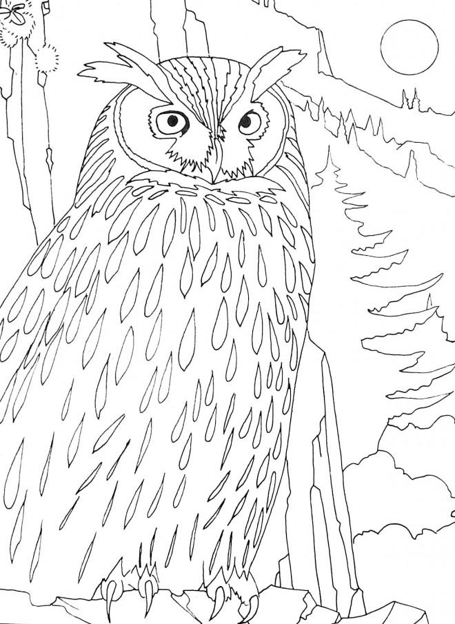 Coloriage et dessins gratuits Hibou dans la forêt à imprimer