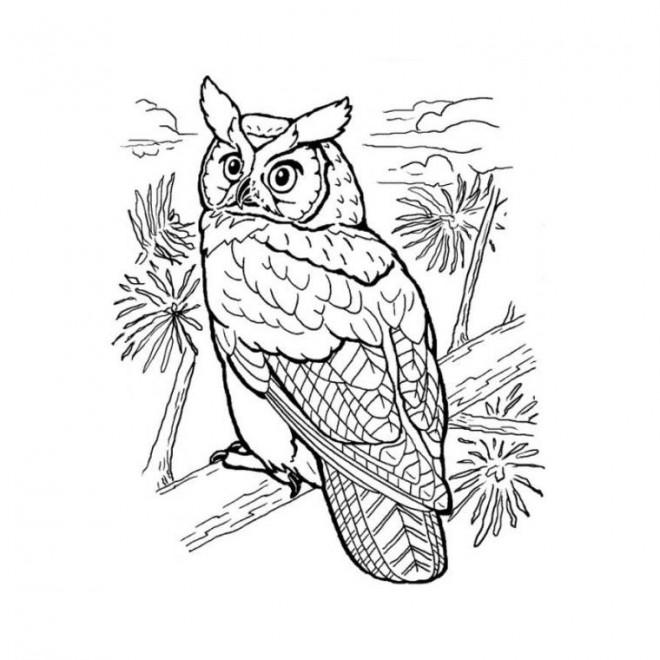 Coloriage et dessins gratuits Hibou dans la nature à imprimer