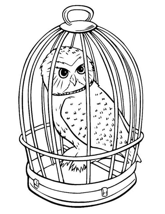 Coloriage et dessins gratuits Hibou dans son cage à imprimer