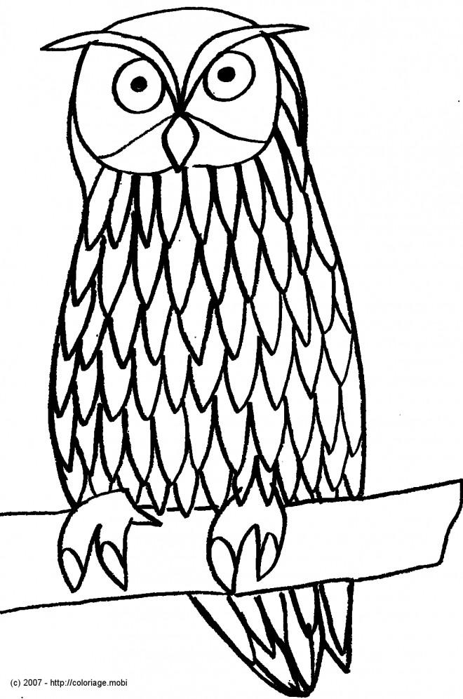 Coloriage et dessins gratuits Hibou debout à imprimer
