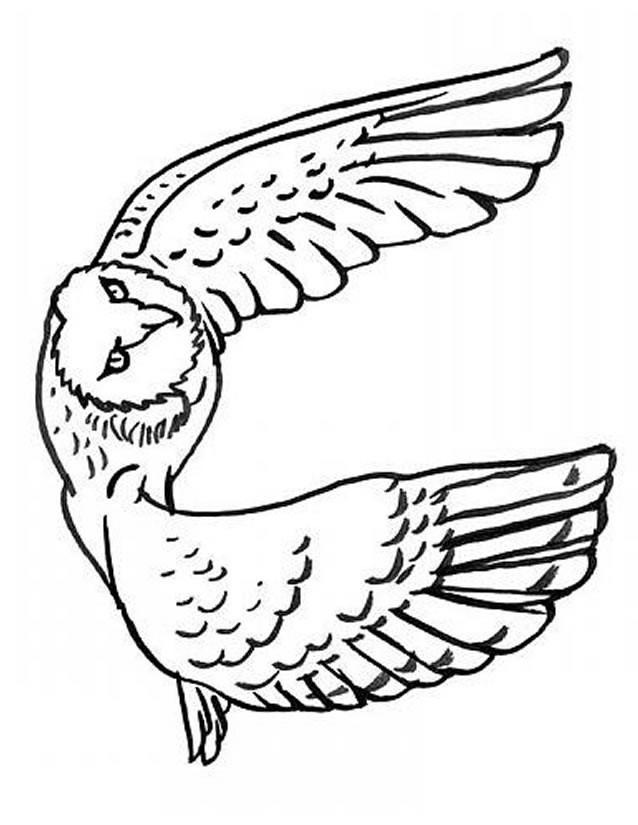 Coloriage et dessins gratuits Hibou en train de voler à imprimer