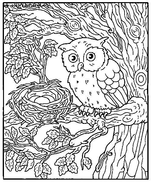 Coloriage et dessins gratuits Hibou et ses Oeufs à imprimer