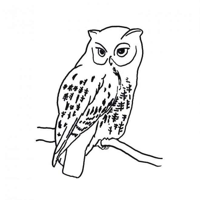 Coloriage et dessins gratuits Hibou isolé à imprimer