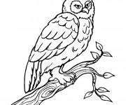 Coloriage et dessins gratuit Hibou sur les branches à imprimer