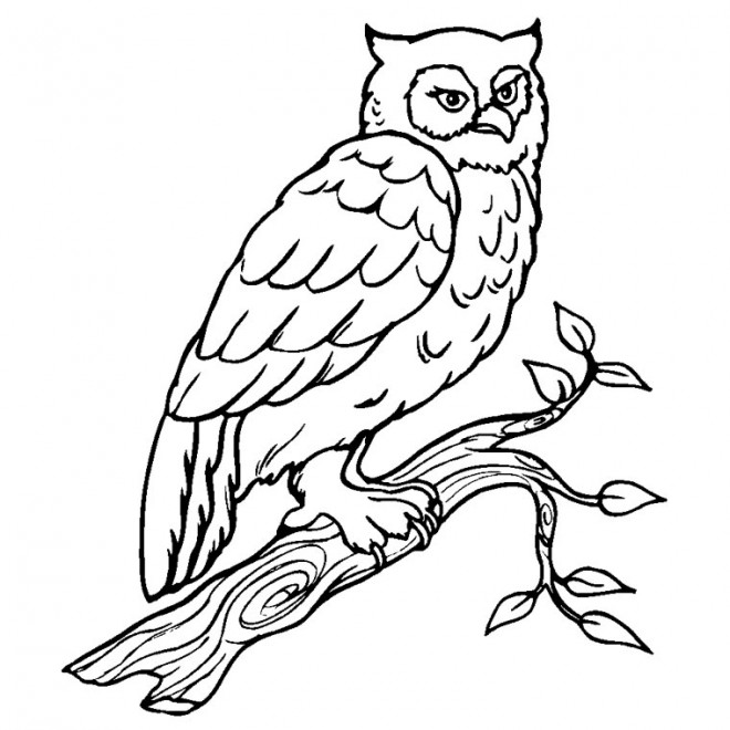 coloriage hibou sur les branches dessin gratuit imprimer. Black Bedroom Furniture Sets. Home Design Ideas