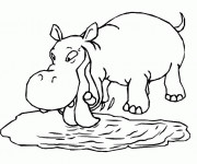 Coloriage Hippopotame en train de boire de l'eau