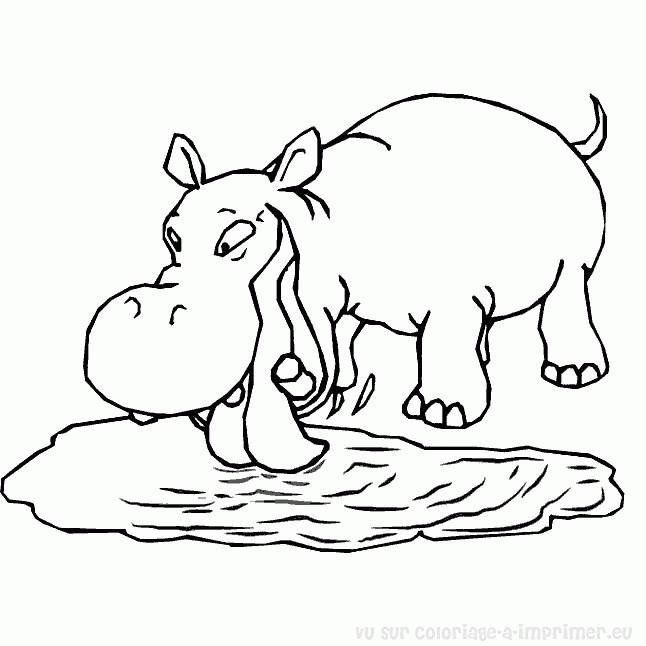 Coloriage et dessins gratuits Hippopotame en train de boire de l'eau à imprimer