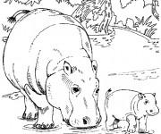 Coloriage et dessins gratuit Hippopotame et son petit à imprimer